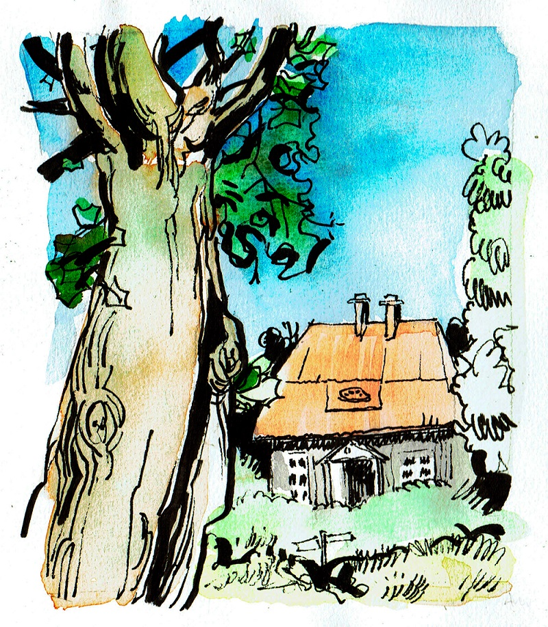 Andrew Ockleston Line and Wash Artwork of Tree