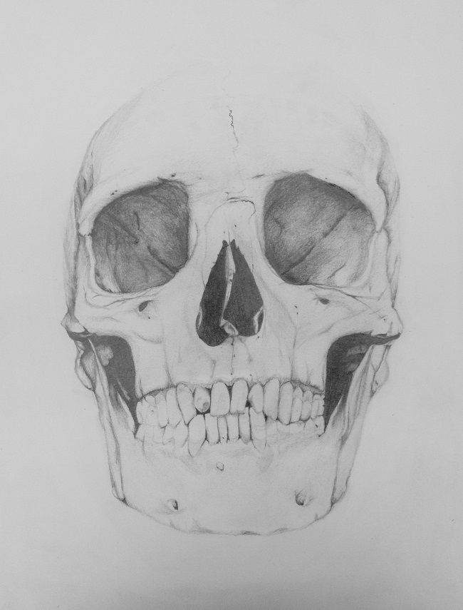 Skull drawing Charlotte's class