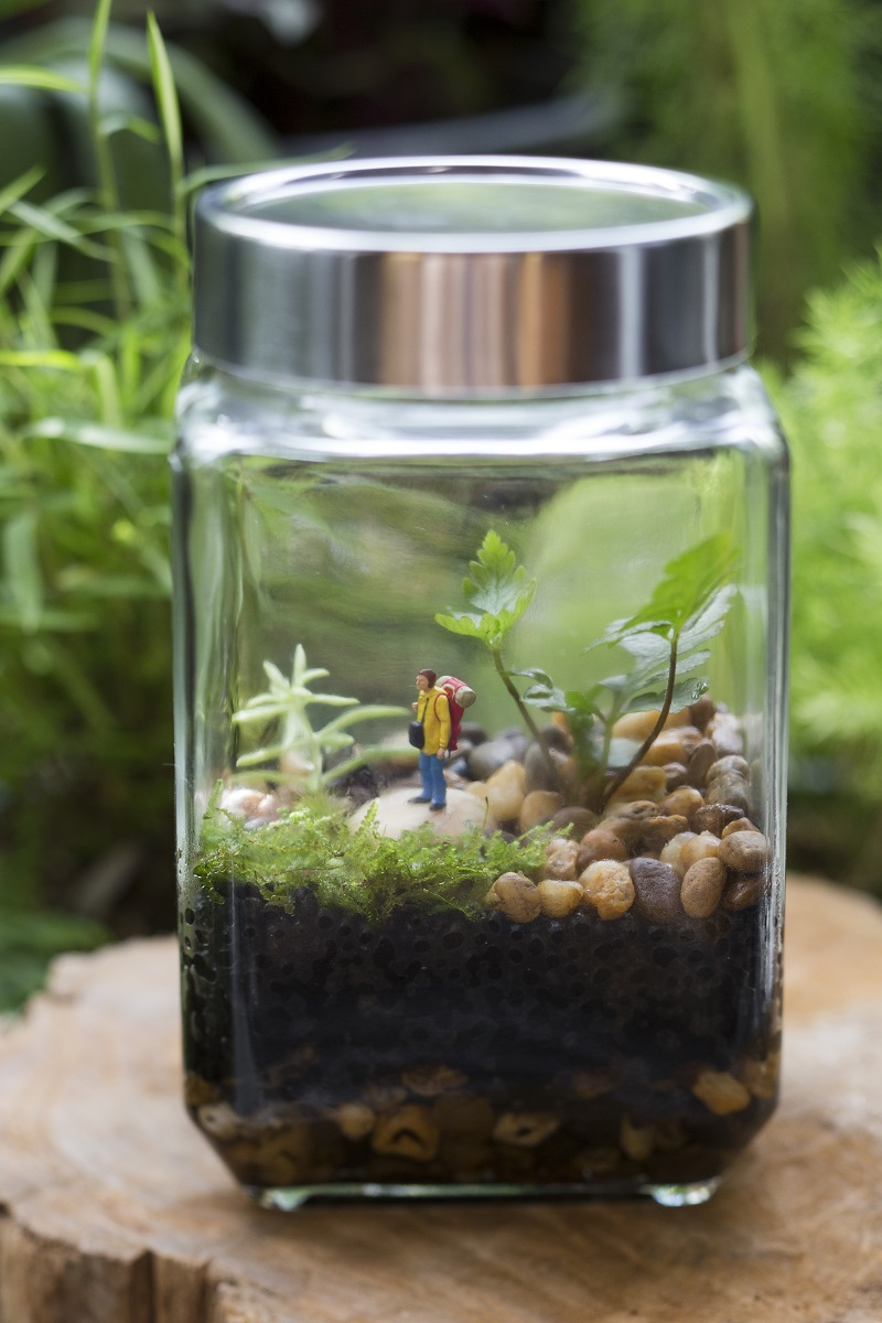 Closed terrarium with camping figure dwarfed by tropical plants