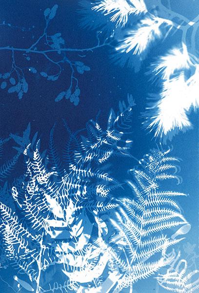 Cyanotype image