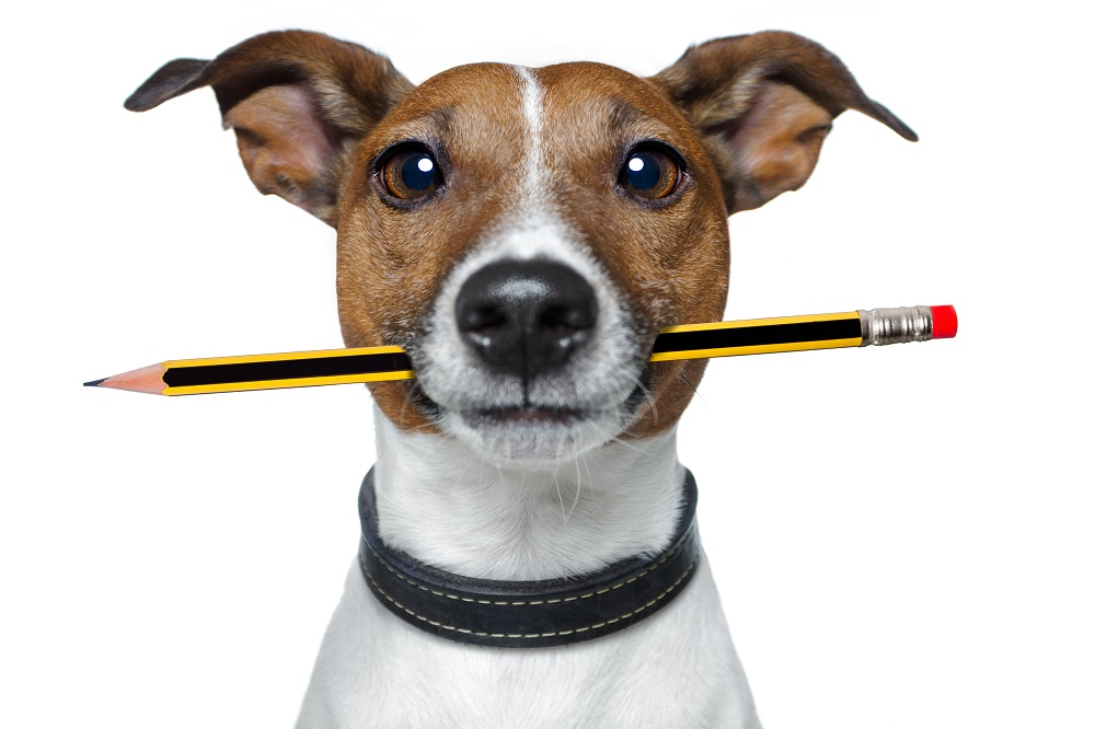 Little dog holding pencil in mouth