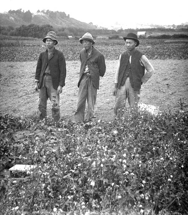 History of Food in Auckland. Chinese market gardeners from an earlier era