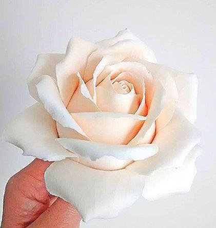 Olga K polymer rose