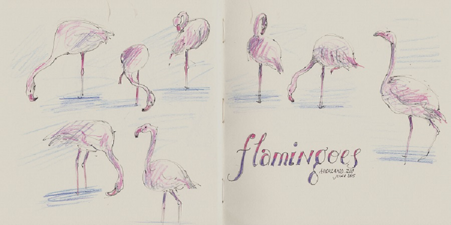 Sandra Morris Flamingoes